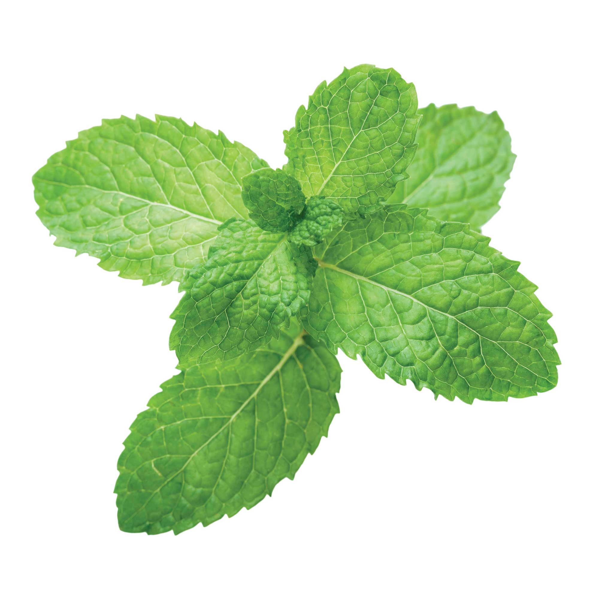This image has an empty alt attribute; its file name is mint.jpg